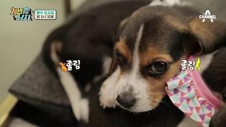 [개밥남 미공개] 현실남매ver. 아기 비글 쌤&애리의 일상_웹오리지널 | Kholo.pk