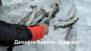 Куда смотрит Рыбнадзор РК? Браконьеры в центре столицы Казахстана Астане GGGKaiSerTV
