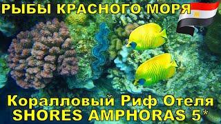 В #ШармЭльШейх  (араб. شرم الشيخ) в ноябре 2020 мы останавливались в  отеле SHORES AMPHORAS RESORT 5* на первой линии и расположенном в  бухте Рас-Ум-Эль-Сид (Ras Um El Sid) на красивом коралловом рифе. Здесь  мы встретили несколько