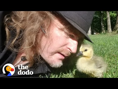 Adorable - Man Teaches Baby Goose How to Fly