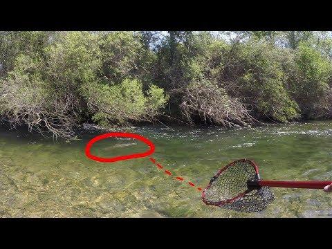 Der Kescher ist zu klein! #freestylefishing