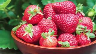 Quick Start Gardening Guide: Bare Root (Strawberries)