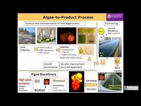 Producción de biocombustibles a partir de algas para afrontar la seguridad alimentaria y energética