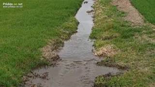 Gnojnica v potoku