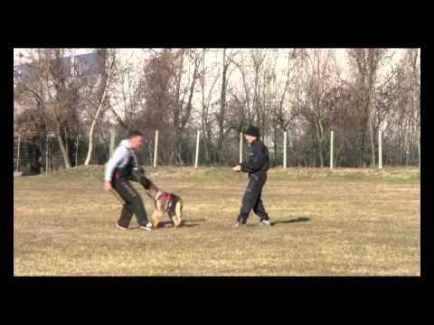 Preview video Tiziano con Zar dell´Altopiano