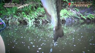 2015 Scissor Comb Fishing Tsutomu Kawashima /シザーコームゲーム