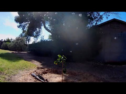 Geprc Cinequeen Tarsier - FPV Recorded With New PNY U3 SD Card