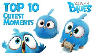 Angry Birds Blues    Top 10 Cutest Moment