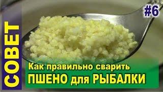Как приготовить пшеничная крупа для рыбалки