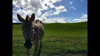 영국풍경 - 웨스트 미드랜드 사파리 공원 (West Midland Safari Park)