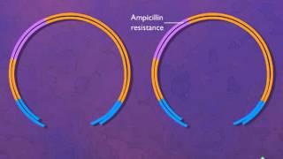 Plasmid - Vector for Cloning