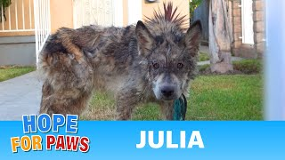 Download Youtube: Julia: a wolf?  a coyote?  a dog?  This rescue is a MUST SEE!