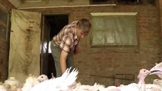 Около 220 индюков выращивает на небольшой ферме кубанский аграрий