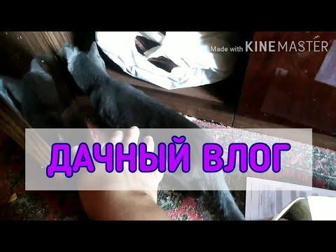 Дилема со Шкафом / МОТИВАЦИЯ на Улучшения / Нужен Совет! // Elena Pero
