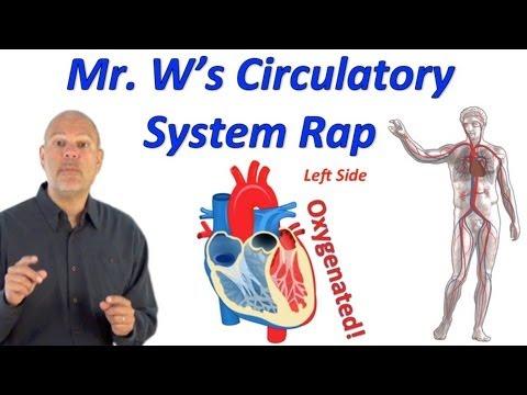 Arterieller Blutdruck