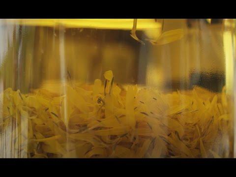 Der Laserschliff der Person von der Pigmentation die Rezensionen