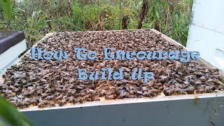 How To Encourage Build-Up In Your Hive