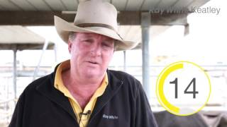 Mount Gambier Cattle Market Snapshot - 9th November 2016