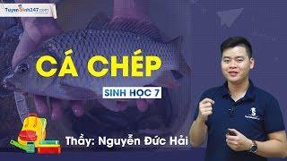 Cá chép - Sinh học 7 – Thầy Nguyễn Đức Hải
