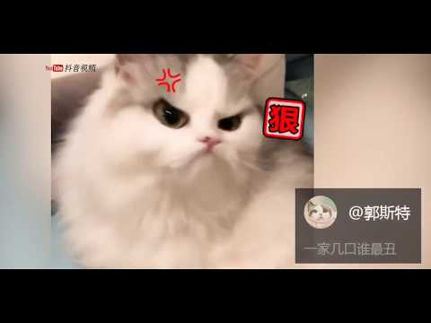 【抖音】動物成精系列 TIK TOK 2018最新動物搞笑視頻合集 (7) 萌寵 超級可愛