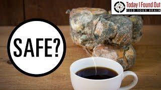 Is It Safe to Eat Moldy Bread or Moldy Cheese? - Video Youtube