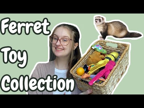 , title : 'FERRET TOY COLLECTION + Some Life Updates   Pazuandfriends