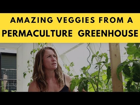 Gardening In Our Greenhouse Provides Amazing Veggies For Our Family using permaculture