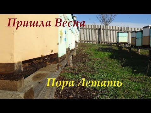Активация пчелы Весенний старт