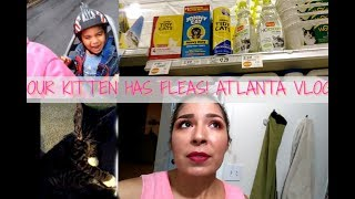 OUR KITTEN HAS FLEAS! | HOW TO GET RID OF FLEAS ON CATS | LULU & ARAM VLOGS