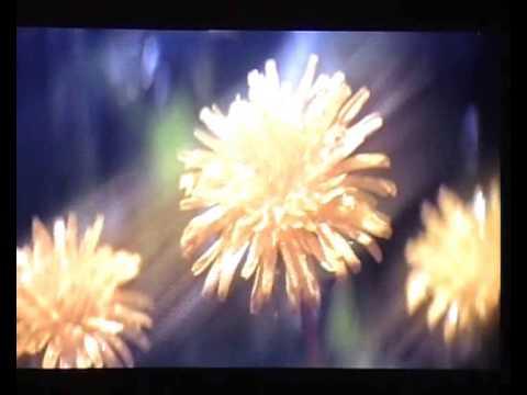 Скачать секреты семейного счастья анджелис барбара