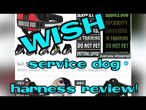 Home / Wish App Service Dog Harness Try-on And Review.