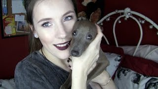 I GOT AN ITALIAN GREYHOUND & Meet My Pet Tag