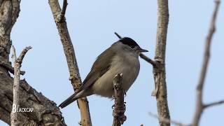 Birdwatching In Cyprus, Autumn