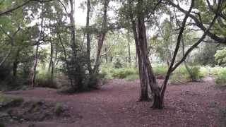 preview picture of video 'SWC Free Walk 147, Gomshall to Dorking. 15/6/13'