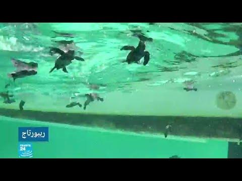 العرب اليوم - شاهد: جزر