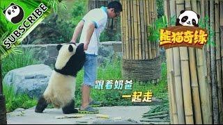 推薦:你不知道的楊奶爸  | iPanda熊貓頻道