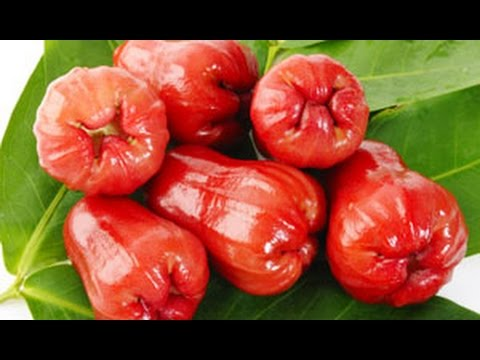 Video Top 10 Health Benefits Of Rose Apple Fruit