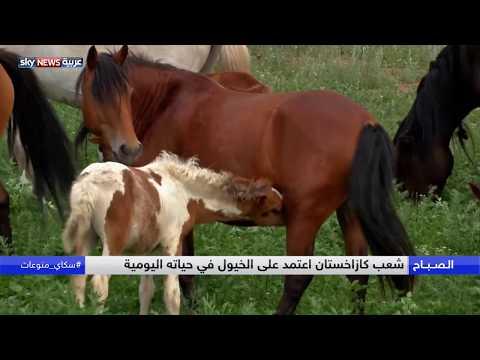 العرب اليوم - تعرف على سر ارتباط شعب كازاخستان بالخيول