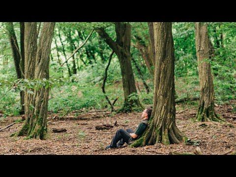 WaldResort am Nationalpark Hainich - Mehr als nur Urlaub