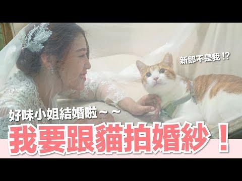 貓咪也來看婚紗