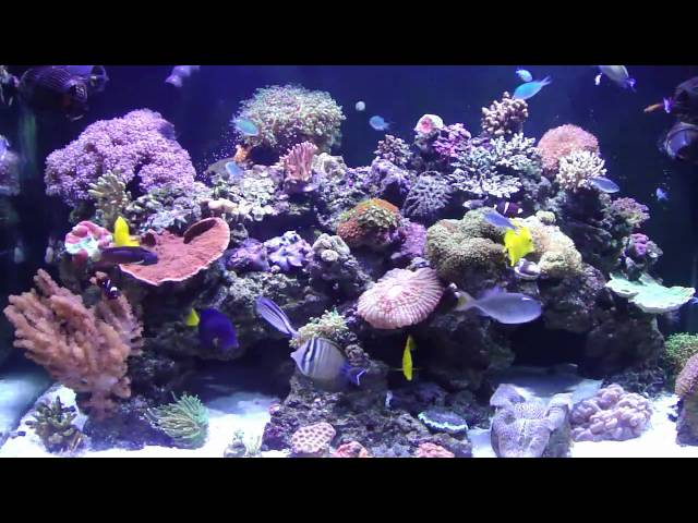 250 gallon REEF SYSTEM. Chapter 1. Reef Tank