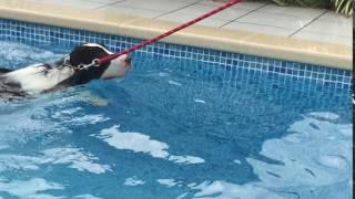 みるみる泳ぎが上達してきました