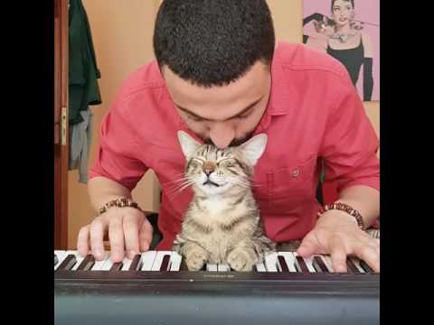 Guy makes videos playing the piano for his super calm cats