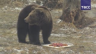 Медведи Умка и Топтыжка предсказали солнечное лето