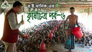 Poultry Farm In BAngladesh  লেয়ার মুরগী, সোনালী মুরগী/ব্রয়লার  পেল্ট্রি খামারীর সফলতার গল্প।