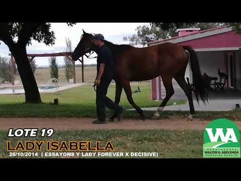 Lote LADY ISABELLA