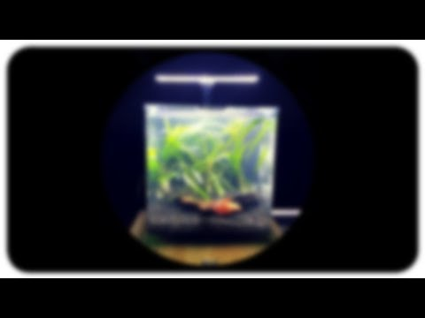 NANO AQUARIUM UNBOXING – Great Little Fish Tank