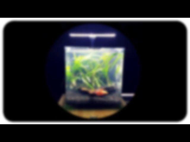 ALL IN ONE NANO TANK - Imagitarium Betta Fish Aquarium