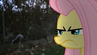 Fluttershy (MLP in real life)