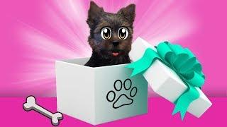 ПОДАРОК МАМЕ ЩЕНОК ПУПСЯ ! Наши котята еще не знают о СОБАЧКЕ  Подружка кошечки Мурки и кота Малыша